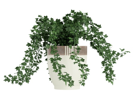 potted-ivy-plant-modern